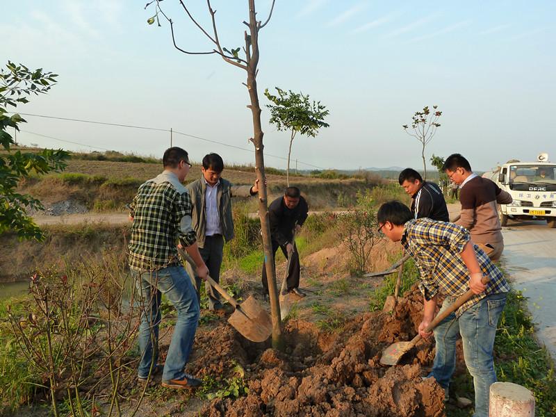 潘村镇开展秋季植树造林活动--中国 明光